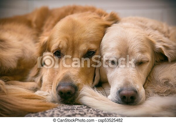 View of two dogs lying - csp53525482