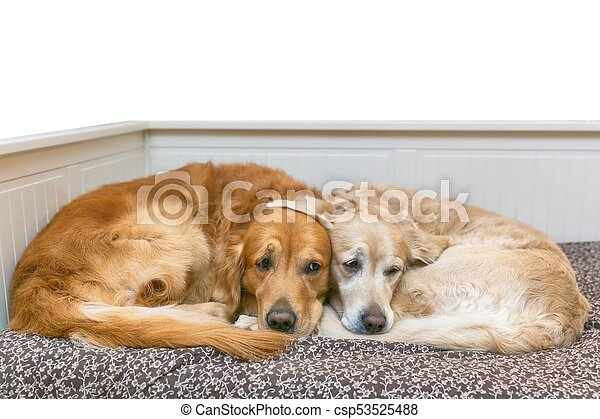 View of two dogs lying - csp53525488