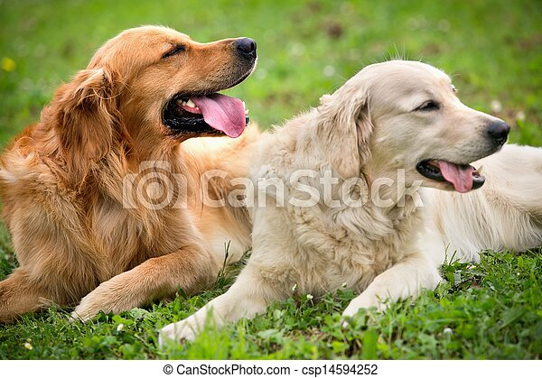 View of two dogs lying - csp14594252