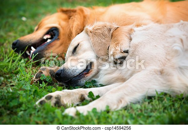 View of two dogs lying - csp14594256