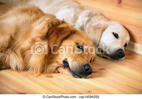 View of two dogs lying - csp14594259