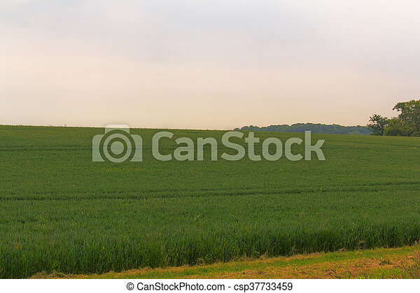 View over the English countryside in the Chilterns - csp37733459