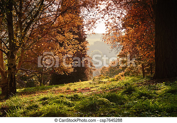 View through Autumn Fall forest with vibrant colors and lush foliage - csp7645288