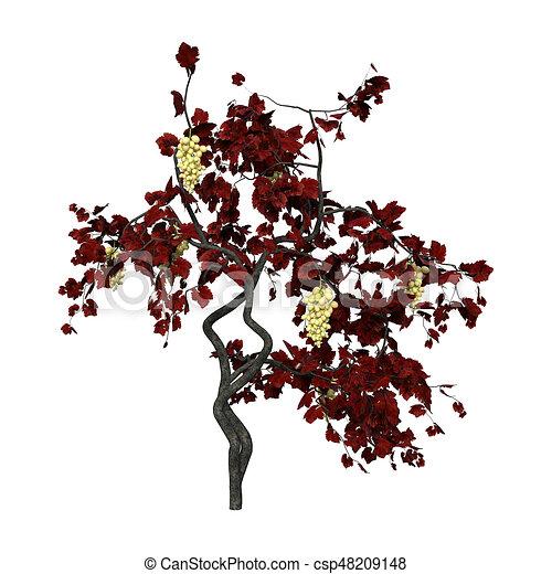 Vigne Rendre Plante Blanc 3d