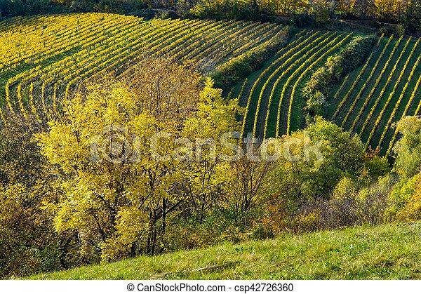 vignoble, automne, colline - csp42726360
