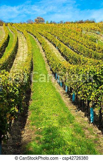 vignoble, automne, colline - csp42726380