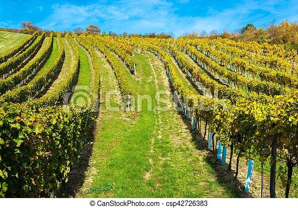 vignoble, automne, colline - csp42726383