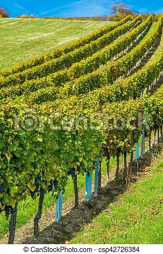 vignoble, automne, colline - csp42726384