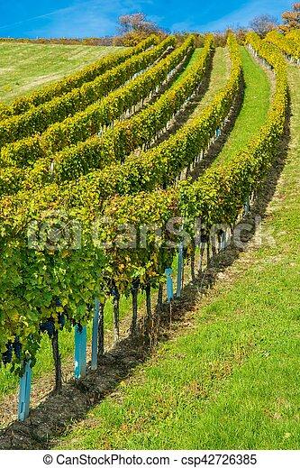 vignoble, automne, colline - csp42726385