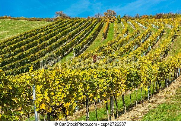 vignoble, automne, colline - csp42726387