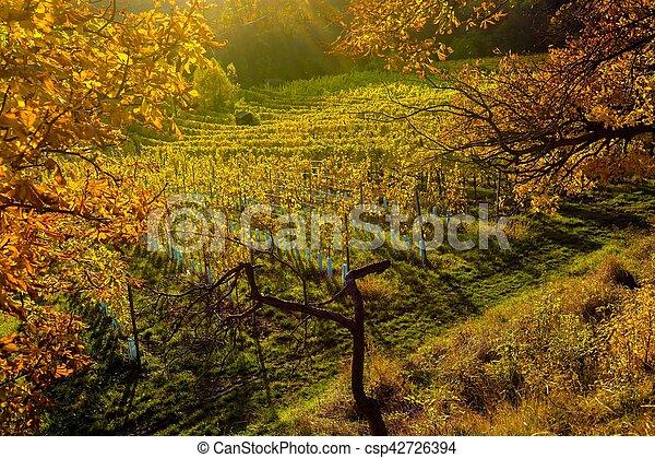 vignoble, automne, colline - csp42726394