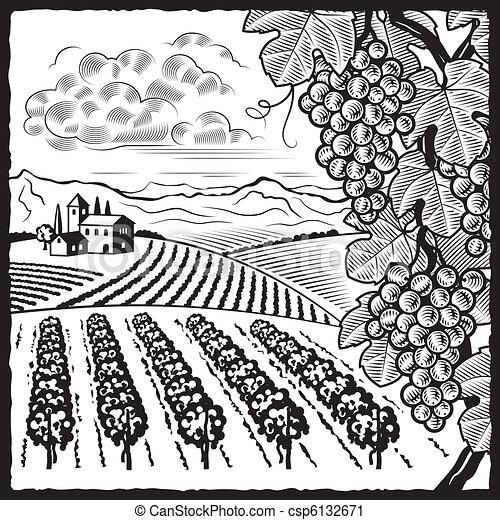 vignoble, blanc, noir, paysage - csp6132671
