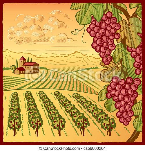 vignoble, paysage - csp6000264
