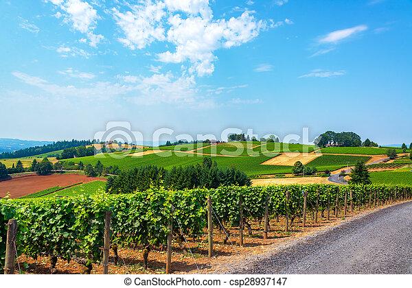 vignobles, collines - csp28937147