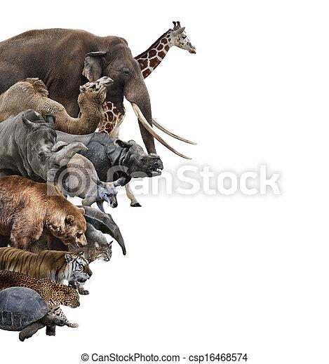 vild, collage, djuren - csp16468574