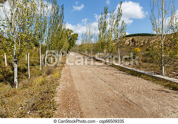 village gravel road in the mountains in trees along the road - csp66509335
