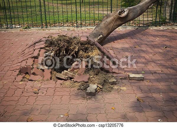 ville, après, arbre, venteux, orage, baissé - csp13205776
