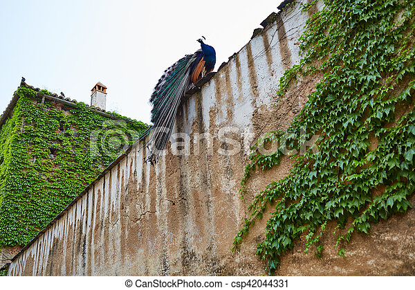 https://comps.canstockphoto.fr/ville-vieux-paon-mur-caceres-photos-sous-licence_csp42044331.jpg