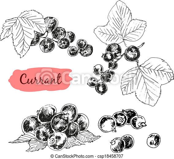 vinbär - csp18458707