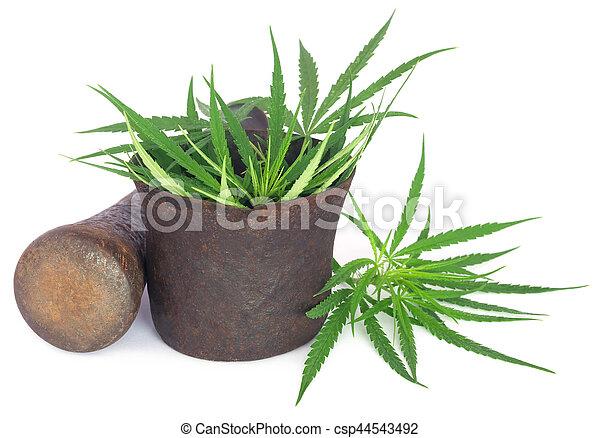 vindima, folhas, marijuana, cannabis, morteiro, ou - csp44543492