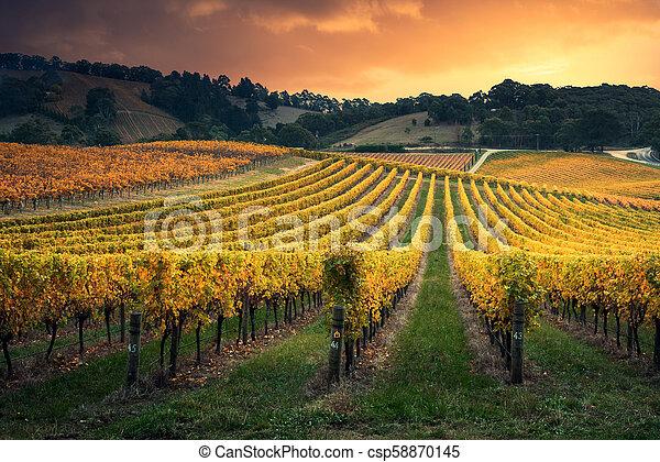 Vine Glow - csp58870145