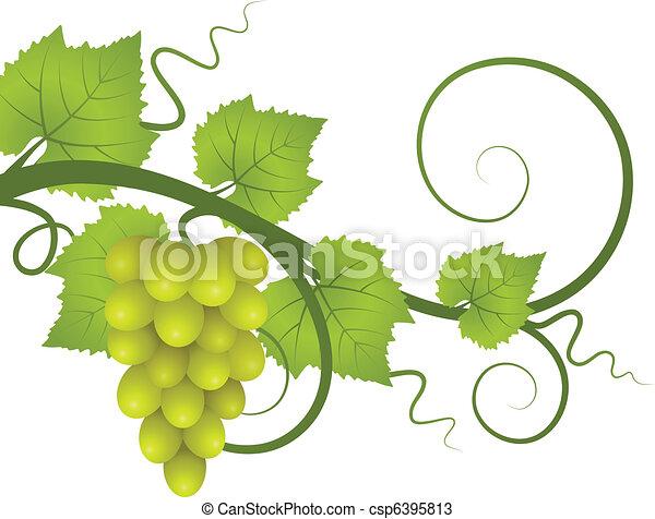 vine. - csp6395813