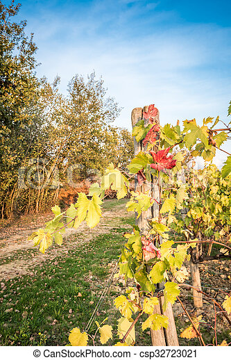 Vines in autumn in the countryside - csp32723021