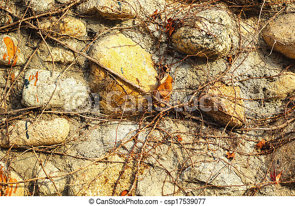 Vines on a stone background - csp17539077
