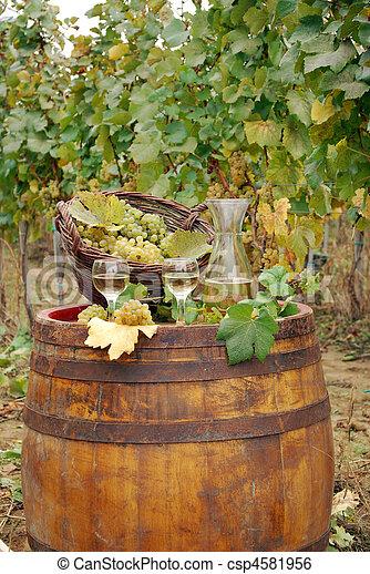 vineyard and white wine - csp4581956