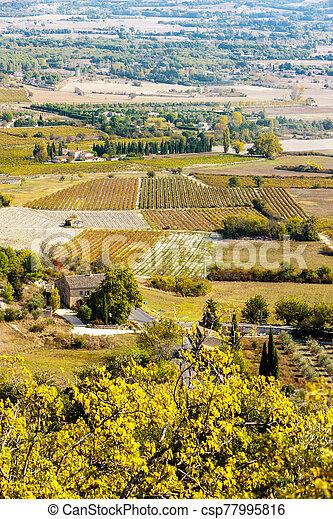 vineyard, Gordes, Provence, France - csp77995816