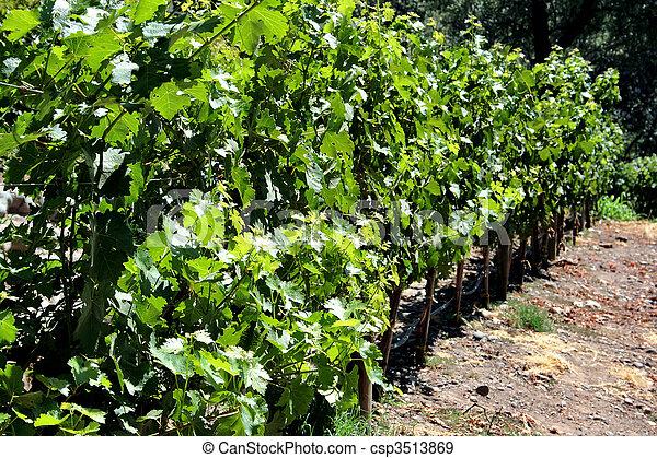 Vineyard in Chile - csp3513869