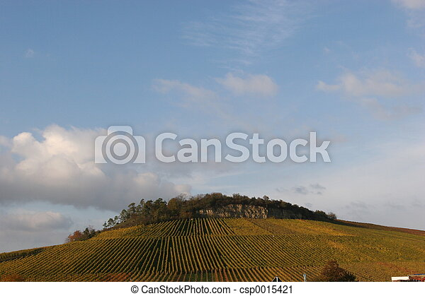 Vineyard in fall - csp0015421