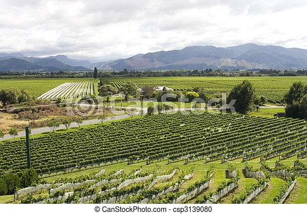 Vineyard in New Zealand - csp3139080
