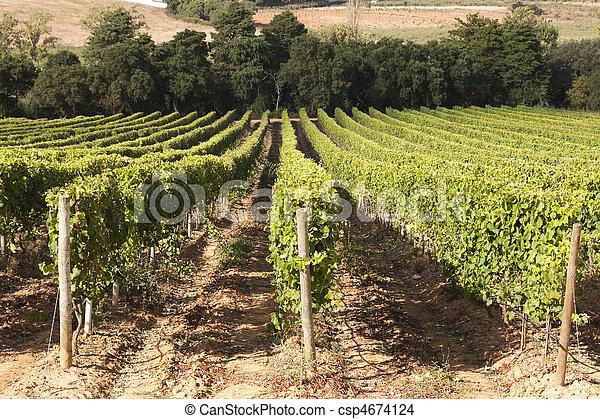 Vineyard in Portugal - csp4674124