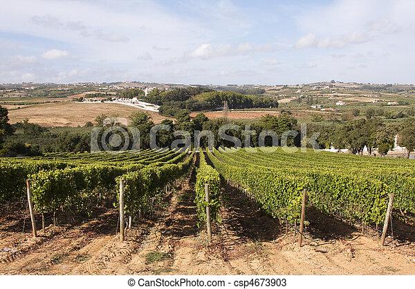 Vineyard in Portugal - csp4673903