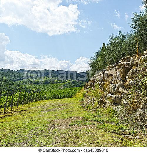 Vineyard in the Autumn - csp45089810