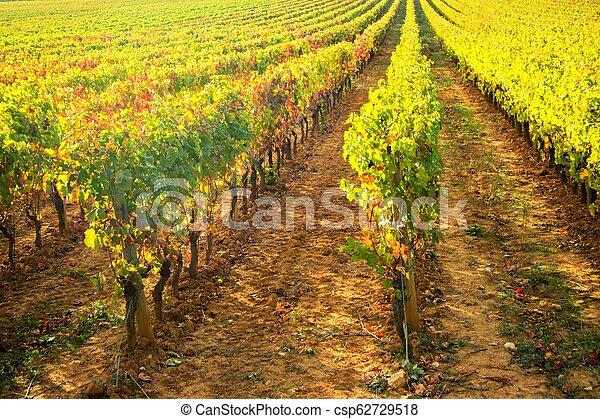 Vineyard in the autumn - csp62729518