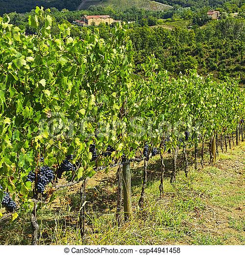 Vineyard in the Autumn - csp44941458