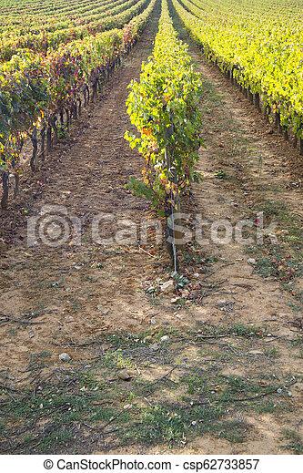Vineyard in the autumn - csp62733857