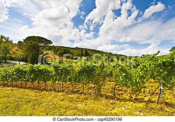 Vineyard in the Autumn - csp45290199