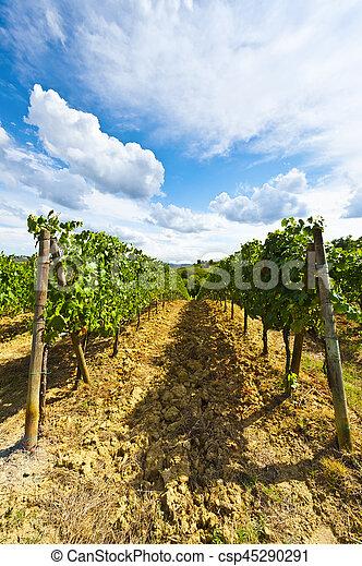 Vineyard in the Autumn - csp45290291
