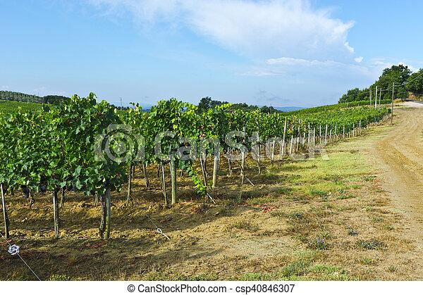Vineyard in the Autumn - csp40846307