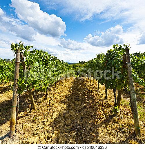 Vineyard in the Autumn - csp40846336