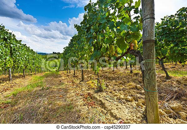 Vineyard in the Autumn - csp45290337