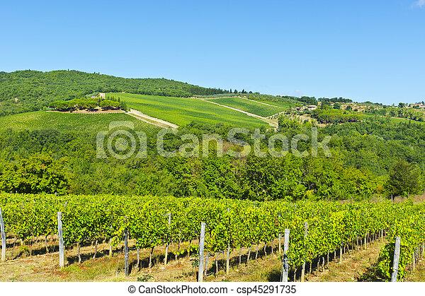 Vineyard in the Autumn - csp45291735
