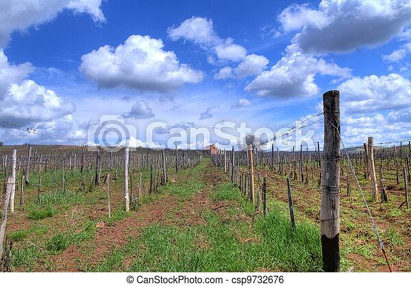 Vineyard in Tokaj - csp9732676