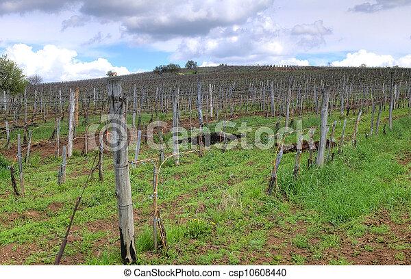 Vineyard in Tokaj - csp10608440