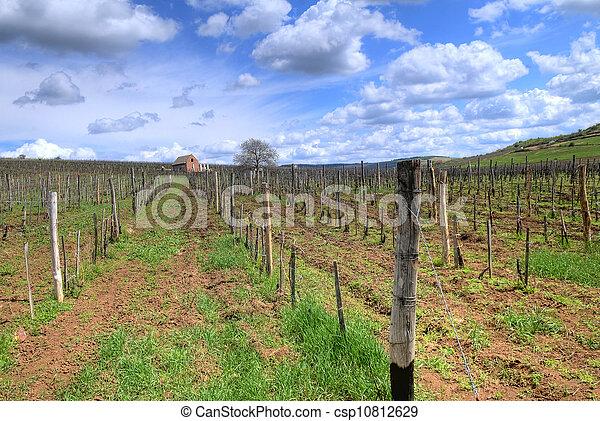Vineyard in Tokaj - csp10812629