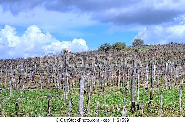 Vineyard in Tokaj - csp11131539