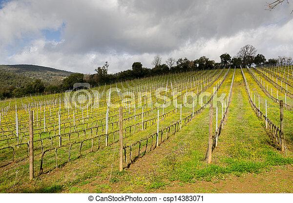 vineyard in Tuscany - csp14383071